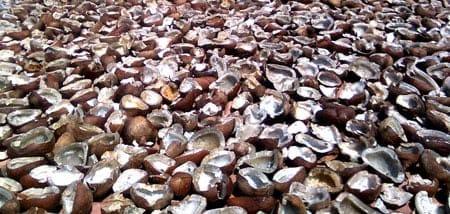 coco-drying