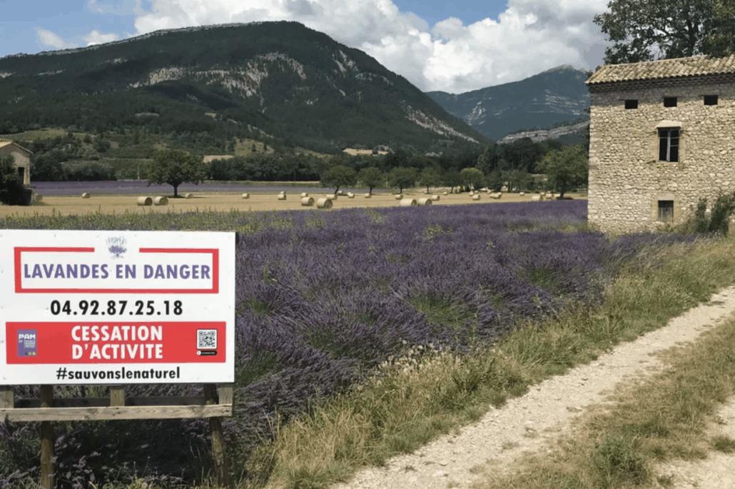Lavande en danger ! Ce panneau est présent le long des champs de lavande pour dénoncer les effets délétères d'une règlementation européenne sur les produits chimiques.